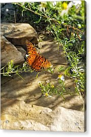 Acrylic Print featuring the photograph Little River Canyon Butterfly  by Rachel Hannah