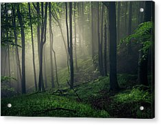 Living Forest Acrylic Print