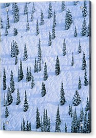 Lone Skier Amongst Trees On Slope Acrylic Print