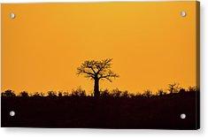 Lone Tree Hill Acrylic Print