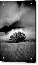 Lone Tree On A Hill Acrylic Print
