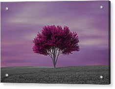 Lonely Tree At Purple Sunset Acrylic Print