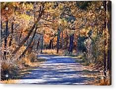 Acrylic Print featuring the photograph Long And Winding Road At Gordon's Pond by Bill Swartwout Fine Art Photography