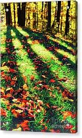 Long Autumn Shadows Acrylic Print