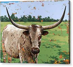 Longhorns #1 Acrylic Print by David Palmer