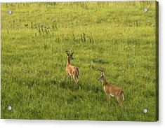 Acrylic Print featuring the photograph Look Both Ways by Scott Bean