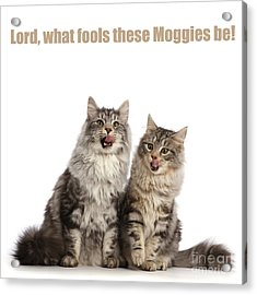 Acrylic Print featuring the photograph Lord, What Fools These Moggies Be by Warren Photographic
