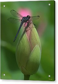 Acrylic Print featuring the photograph Lotus Bud And Slaty Skimmer Dragonfly Dl0006 by Gerry Gantt