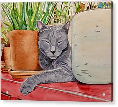 Louie In An Urban Jungle Acrylic Print