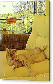 Acrylic Print featuring the photograph Lounging Around by Dorothy Berry-Lound