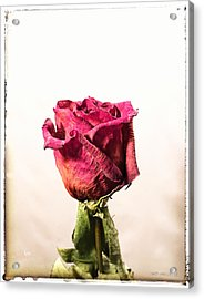 Love After Death Acrylic Print