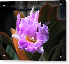Acrylic Print featuring the photograph Love Letter Orchid by Bill Swartwout Fine Art Photography