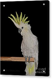 Acrylic Print featuring the photograph Lucy by Debbie Stahre