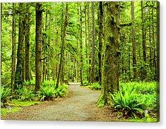 Lush Green Rain Forest Acrylic Print by Jordan Siemens