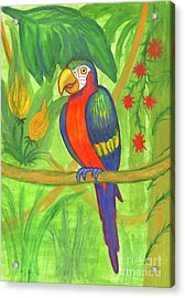 Macaw Parrot In The Wild Acrylic Print