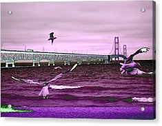 Mackinac Bridge Seagulls Acrylic Print