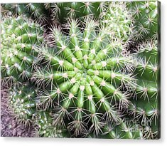Macro Of Succulent Plant In The Desert Acrylic Print