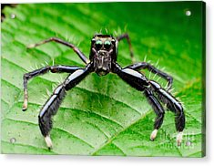 Macro Photography With Background Blurr Acrylic Print
