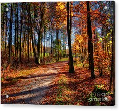 Magic Of The Forest Acrylic Print
