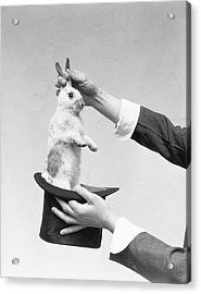 Magician Pulling Rabbit Out Of Hat Acrylic Print by H. Armstrong Roberts