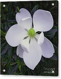 Acrylic Print featuring the painting Magnolia Flower Photo F9718 by Mas Art Studio