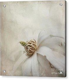 Magnolia Stellata Acrylic Print