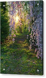 Acrylic Print featuring the photograph Magnolia Tree Sunset by Nathan Bush
