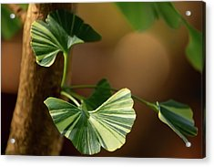 Acrylic Print featuring the photograph Maidenhair Tree by Dale Kincaid