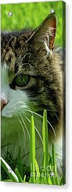 Acrylic Print featuring the photograph Maine Coon Cat Photo A111018 by Mas Art Studio