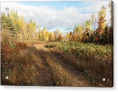 Acrylic Print featuring the photograph Maine Wilderness Color by Rick Hartigan