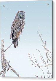 Majestic Great Gray Owl Acrylic Print