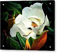 Majestic Magnolia Flower Acrylic Print