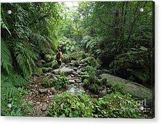 Man Exploring Dense Tropical Jungle And Acrylic Print