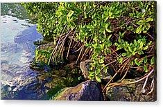 Mangrove Bath Acrylic Print