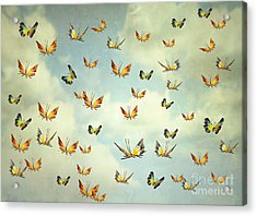 Many Colorful Butterflies Flying Into Acrylic Print