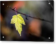 Acrylic Print featuring the photograph Maple Flag by Michael Arend