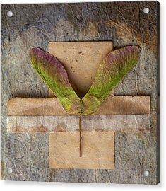 Maple Tree Seed Pod Acrylic Print