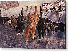March Of The Mau Acrylic Print