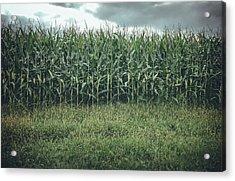 Maze Field Acrylic Print