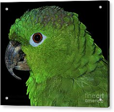 Acrylic Print featuring the photograph Mealy Amazon by Debbie Stahre