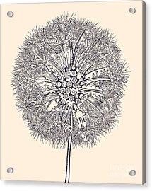 Mechanical Dandelion Acrylic Print