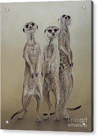 Meerkat Mob, Sun Angels Acrylic Print