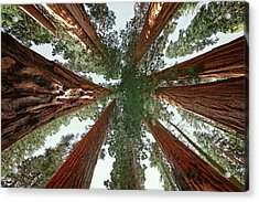 Acrylic Print featuring the photograph Meet The Giants by Marji Lang