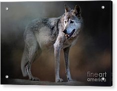 Mexican Wolf Acrylic Print