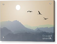 Migrating Cranes To The Sun Over The Acrylic Print
