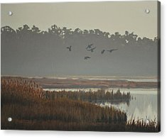 Acrylic Print featuring the painting Misty Marsh by Peter Mathios