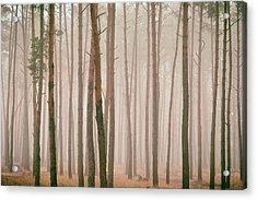 Misty Pines. Horytsya, 2018. Acrylic Print