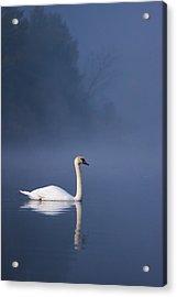 Misty River Swan 2 Acrylic Print