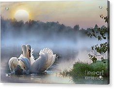 Misty Swan Lake Acrylic Print