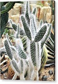 Mojave Prickly Pear Acrylic Print